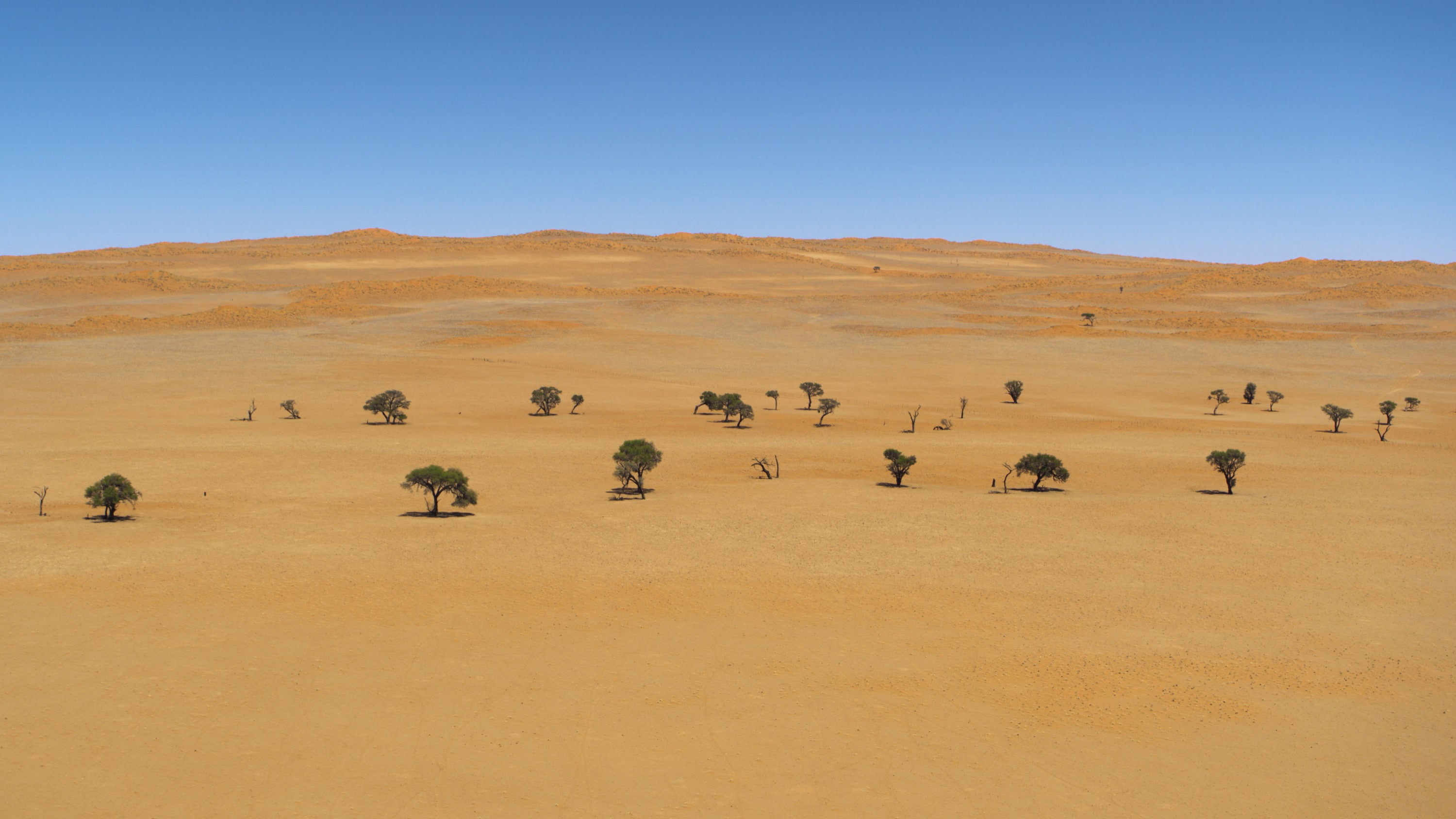 Trees dotted against the red ground in the Namib-Naukluft Park. (National Geographic for Disney+)