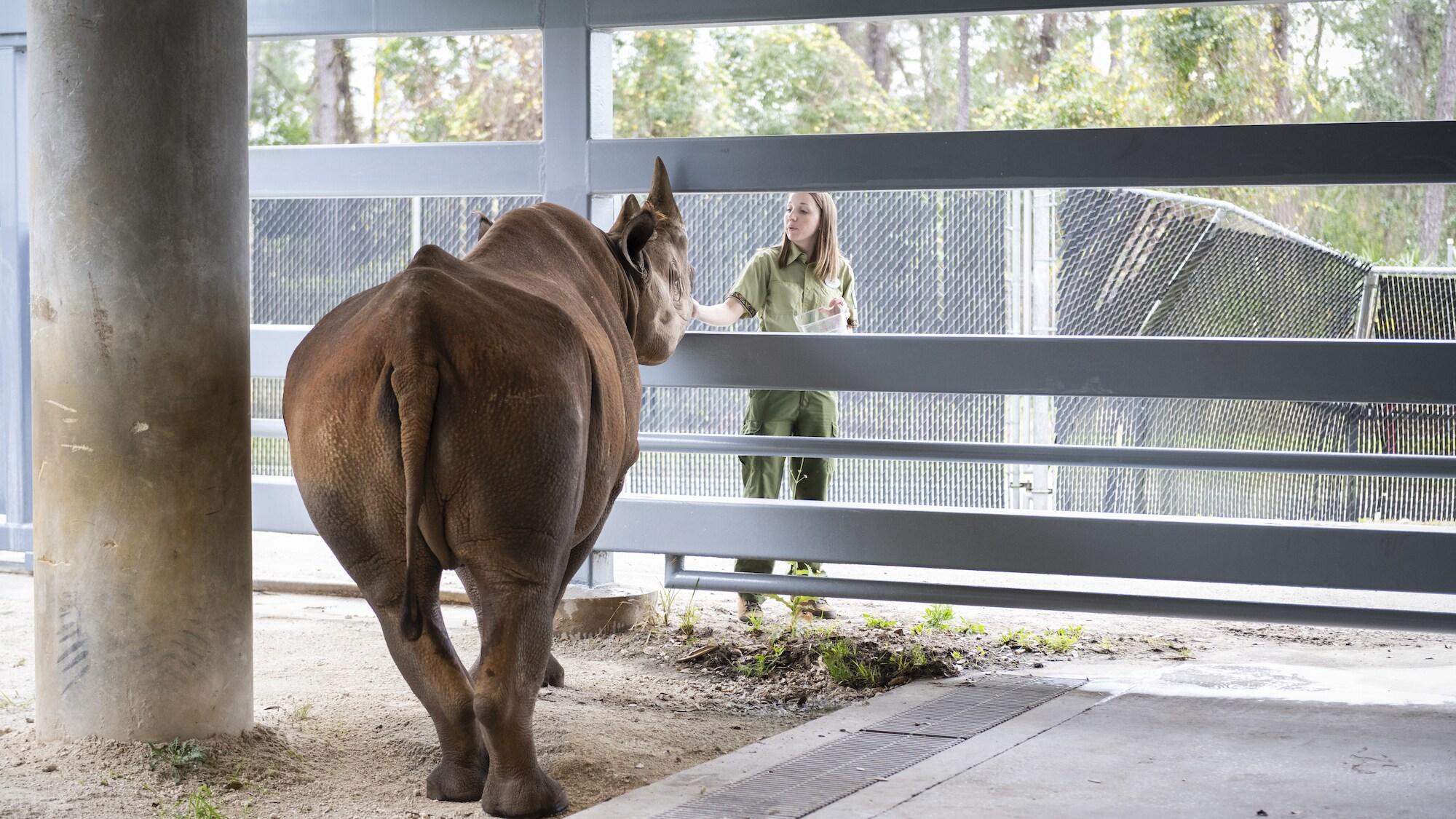 Badru the Black Rhino. (Charlene Guilliams/Disney)
