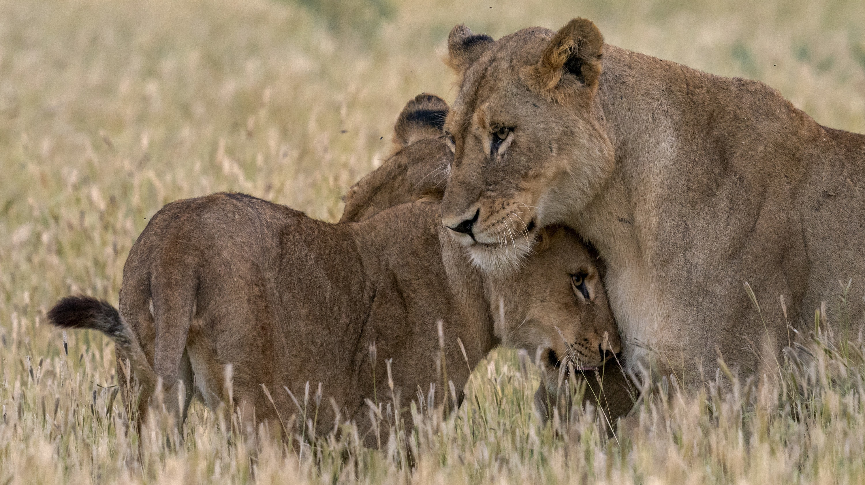 Ama protects Nuru and Issa. (National Geographic for Disney+/Russell MacLaughlin)