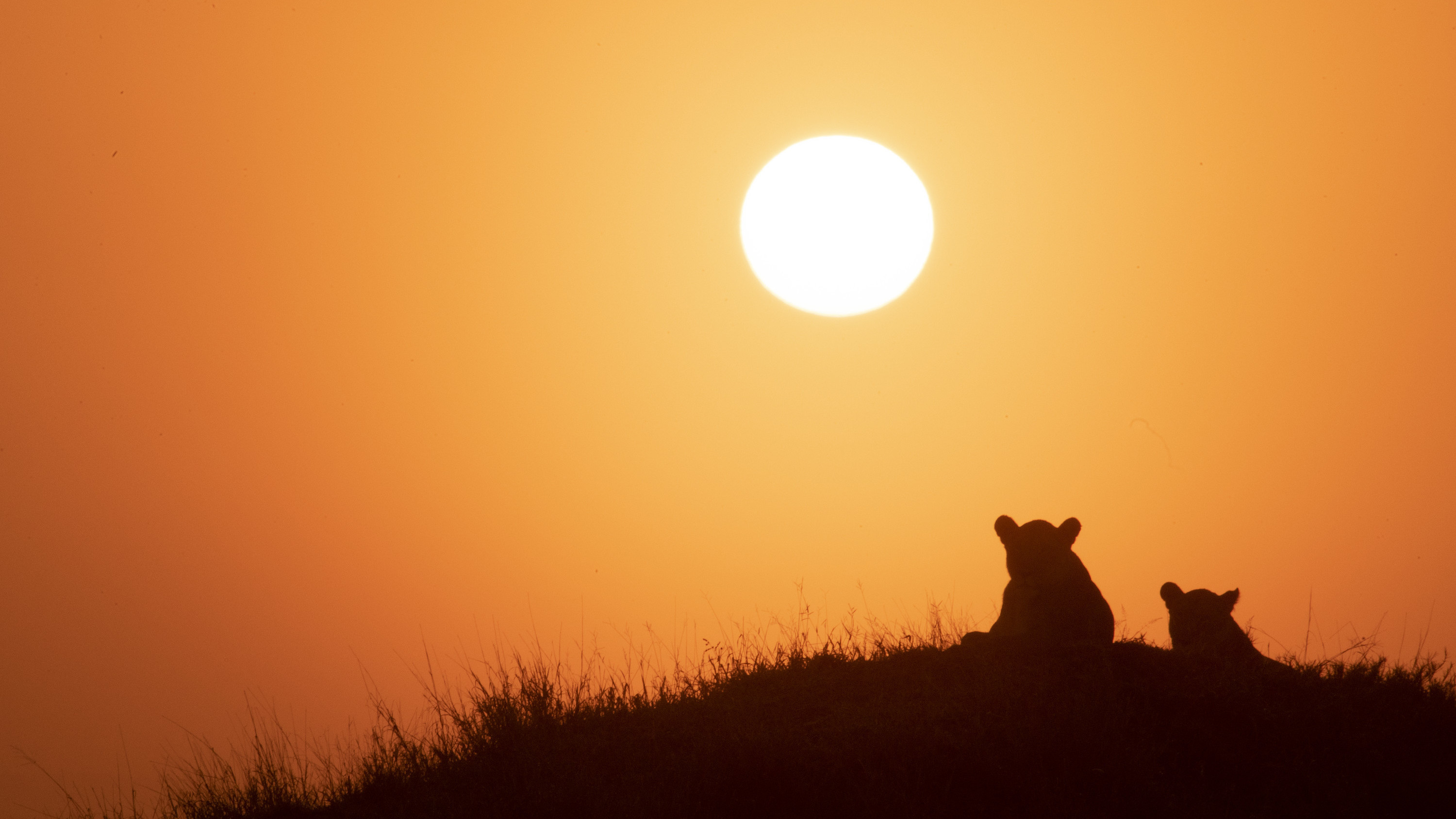 Issa and Nuru relax on a hill at sundown. (National Geographic for Disney+/Russell MacLaughlin)