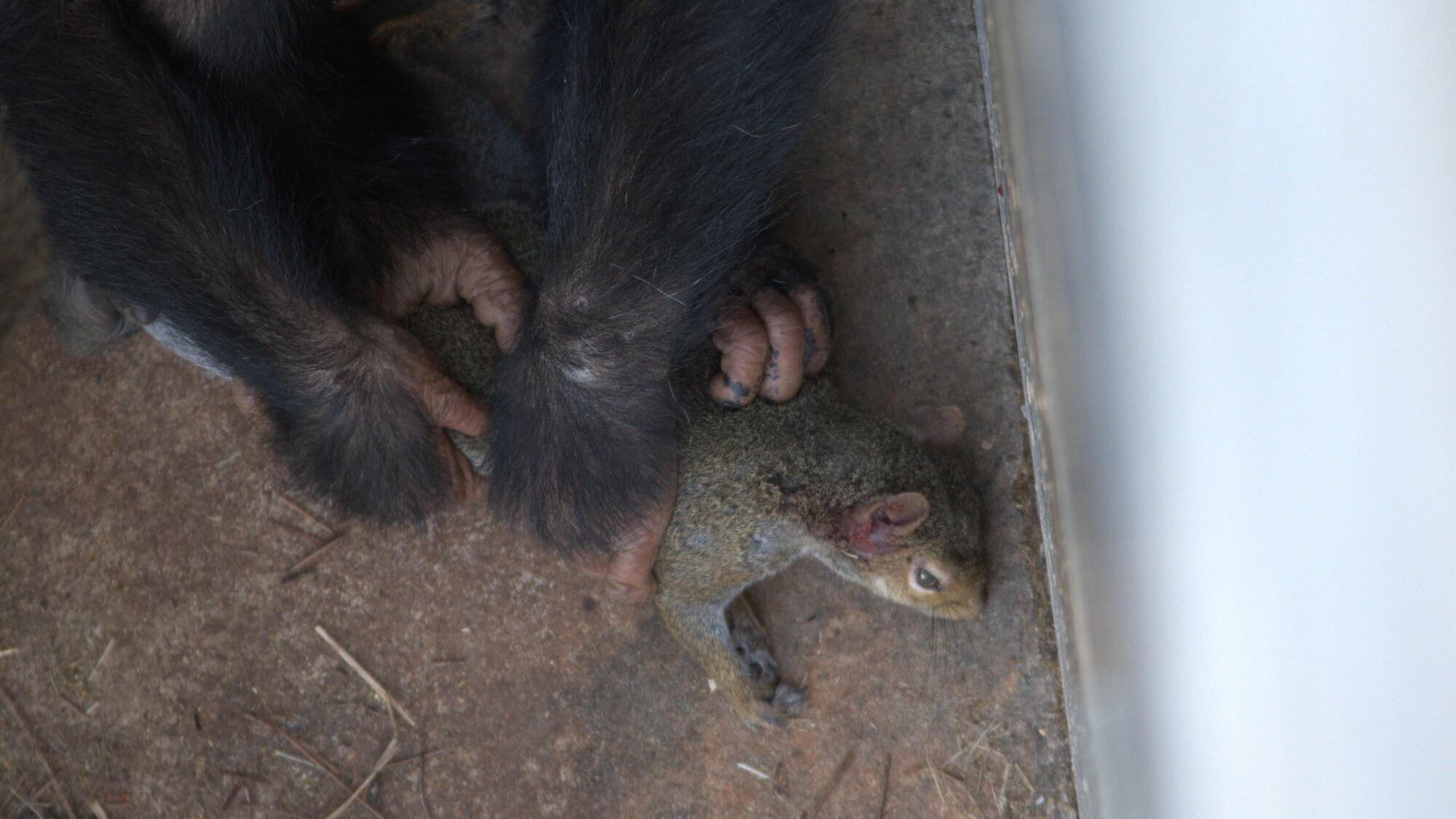Carlee holding dead squirrel. Sara Soda's group. (Nicholas Chapoy)