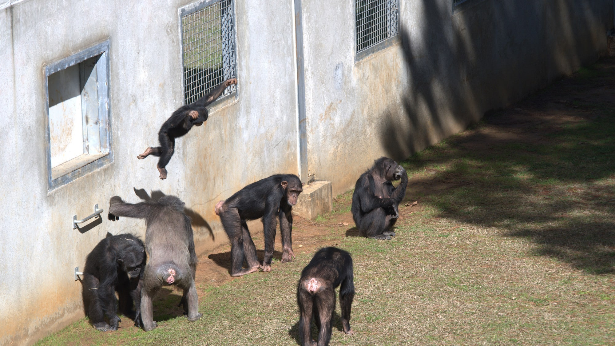 Sara Soda's group by the enclosure wall. Carlee leaping in to the air. (Nicholas Chapoy)