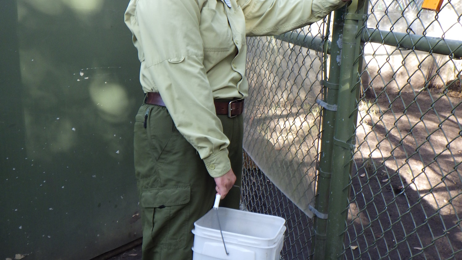 Keeper prepares to place zebra poop for enrichment in the hyena enclosure. (Disney)