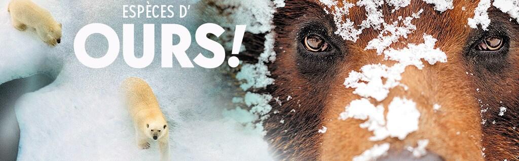 Concours Espèces d'ours (hero promo)