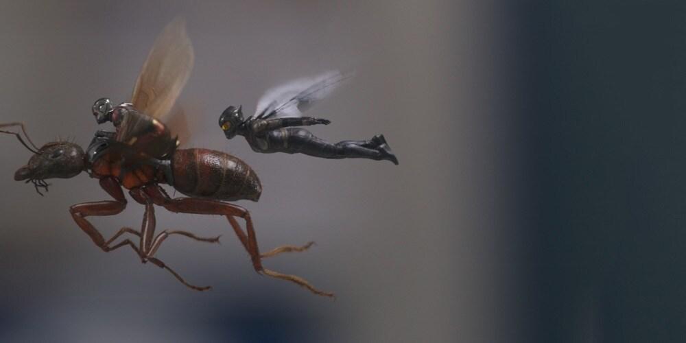 Ant-Man a Wasp | V kinech od 5. července