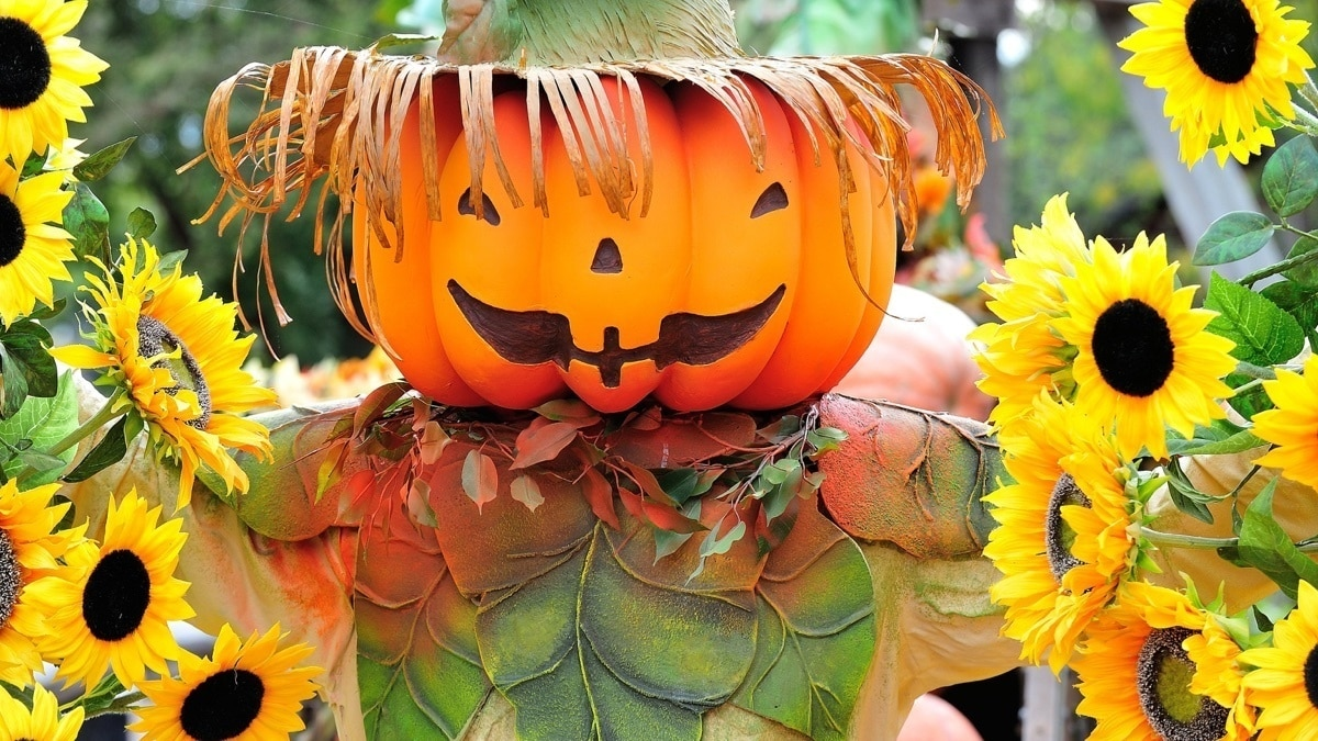 Close up of a pumpkin scarecrow surrounded by sunflowers