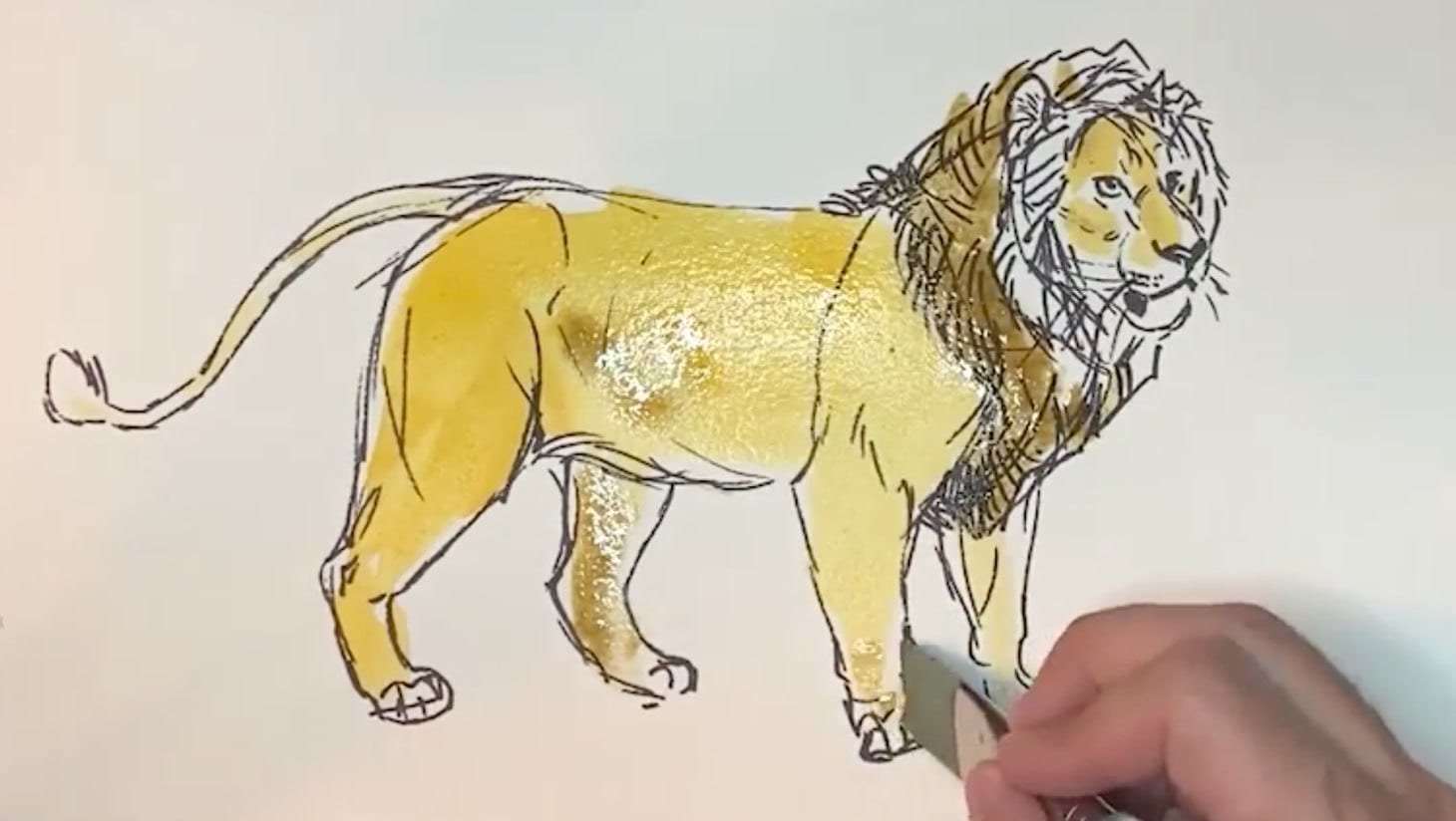 A sketch of a lion