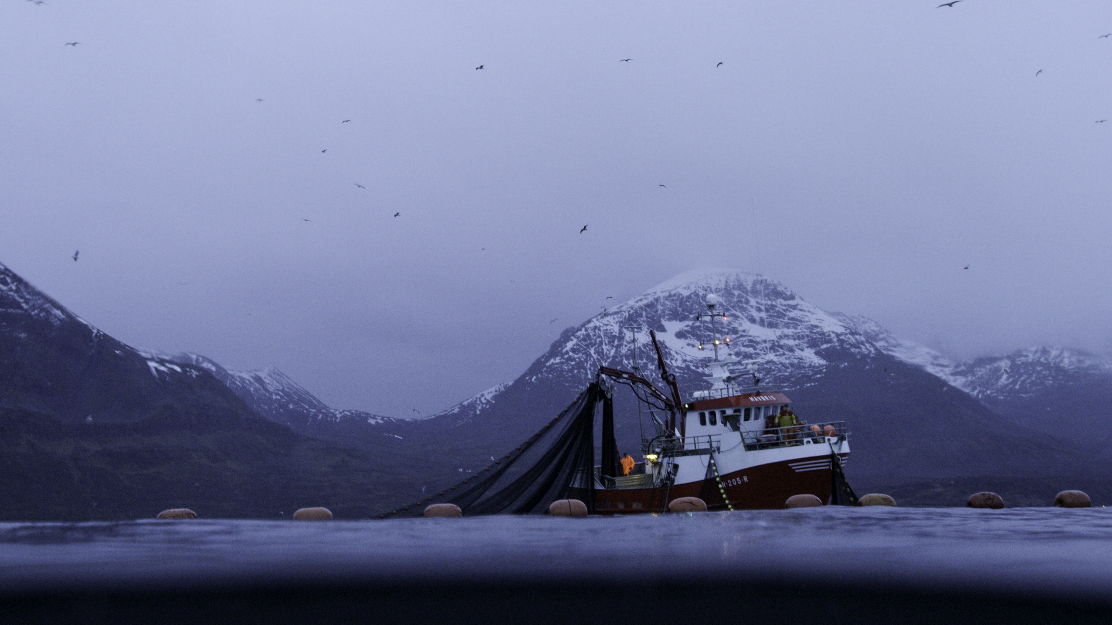 Orcas have learned to take advantage of Norway's fishing industry for easy prey. (National Geographic for Disney+/Luis Lamar)