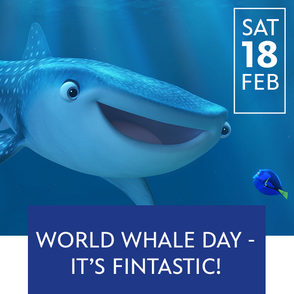 Stream Promo - World Whale Day