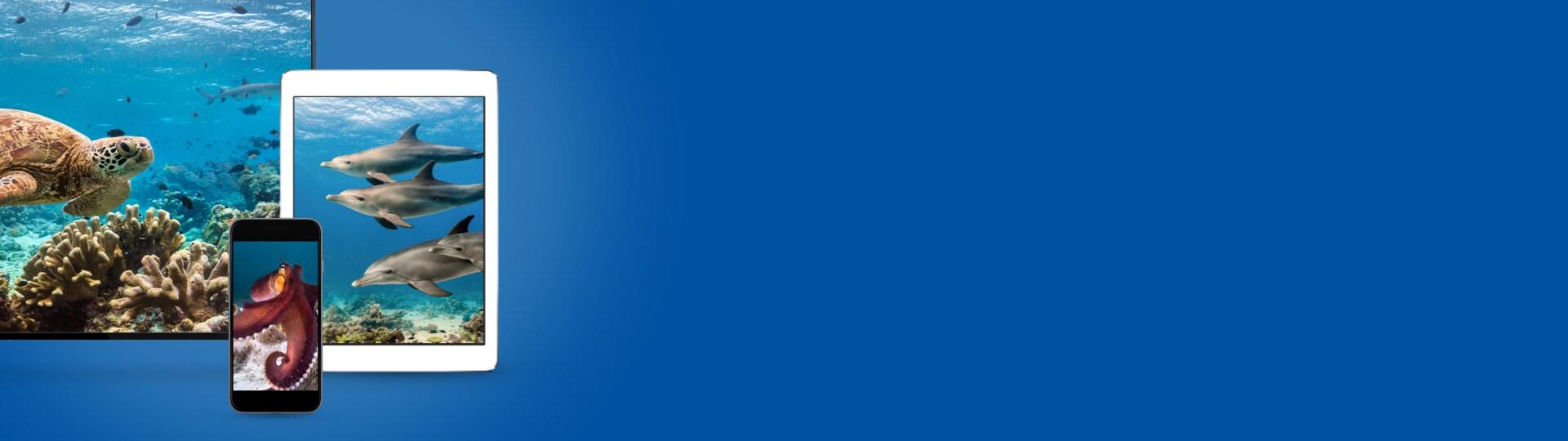 Blue | Disponible en achat digital