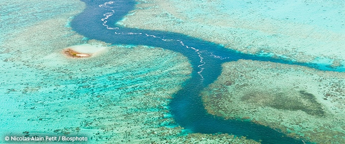 La biodiversité marine en territoires français du Pacifique Sud