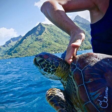 La tortue Vaiana-Océane retrouve le large à Moorea