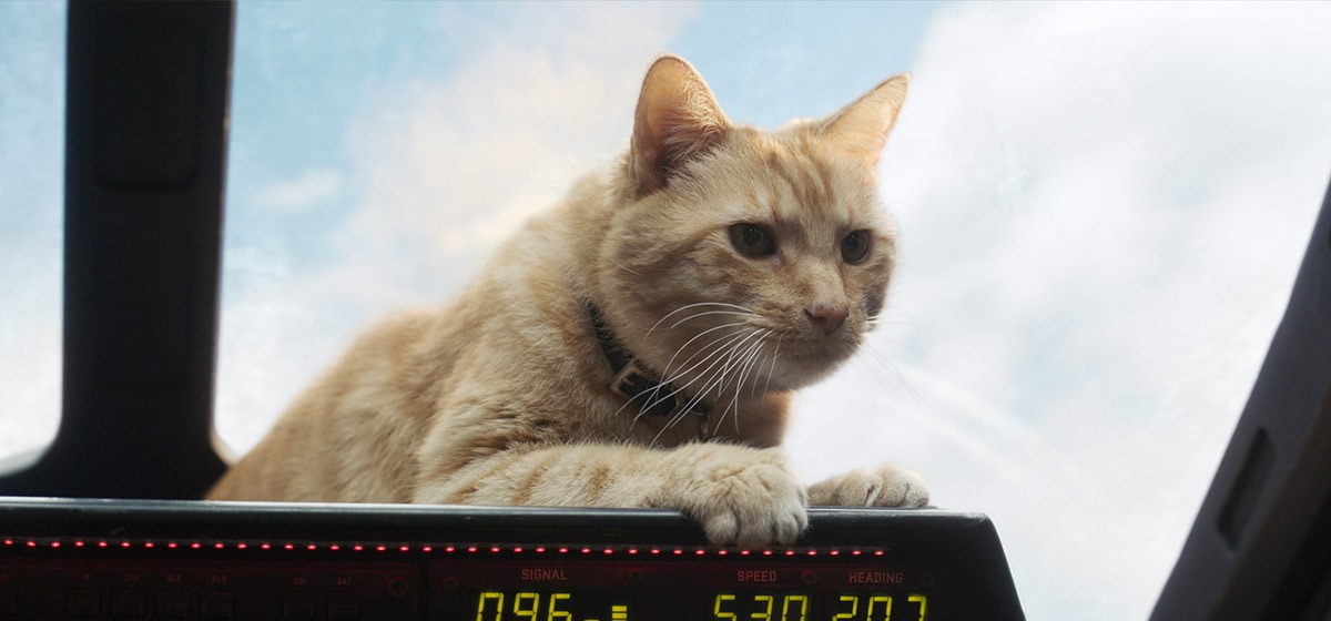 Goose the cant sits in the cockpit in Marvel Studios' Captain Marvel