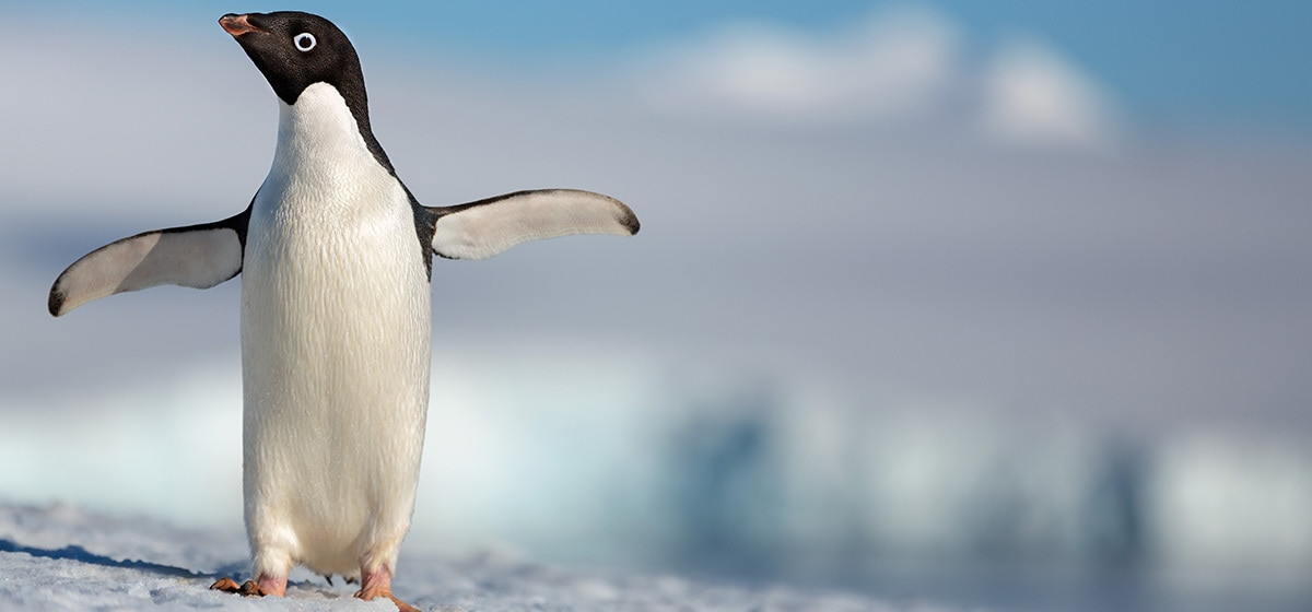 Penguins | Disneynature