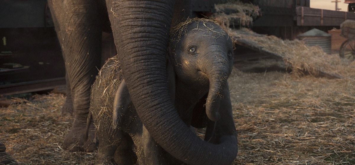 """Dumbo stands with his mother from the movie """"Dumbo"""""""