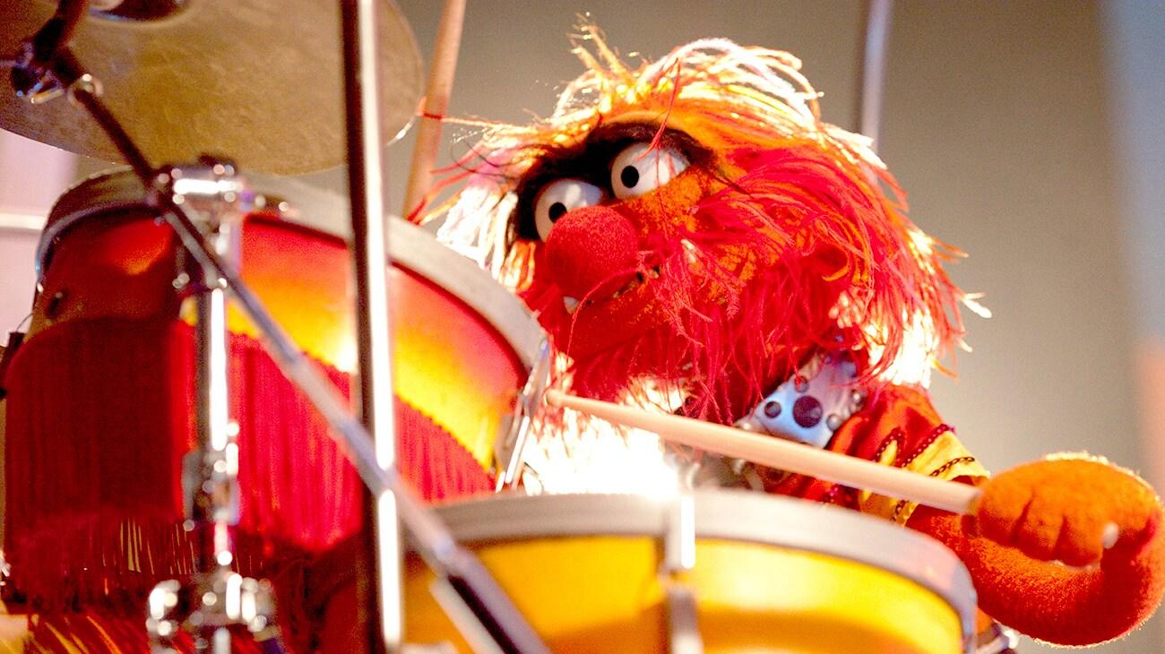 Animal sitting at a drum set