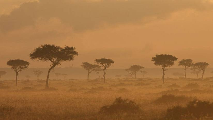 Picture of trees in the African Savanna