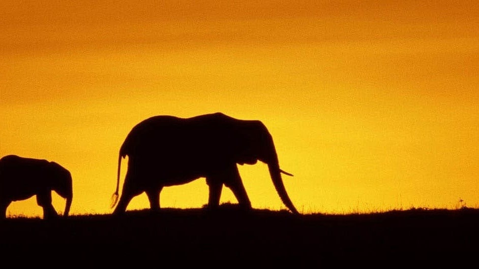 A family of elephants in the sunset.