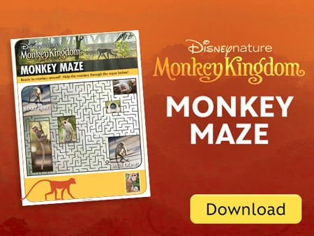 MK Monkey Maze