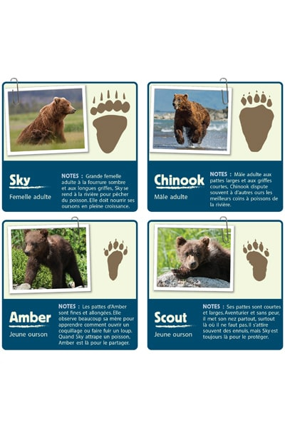 Guide d'identification des ours bruns - Grizzly