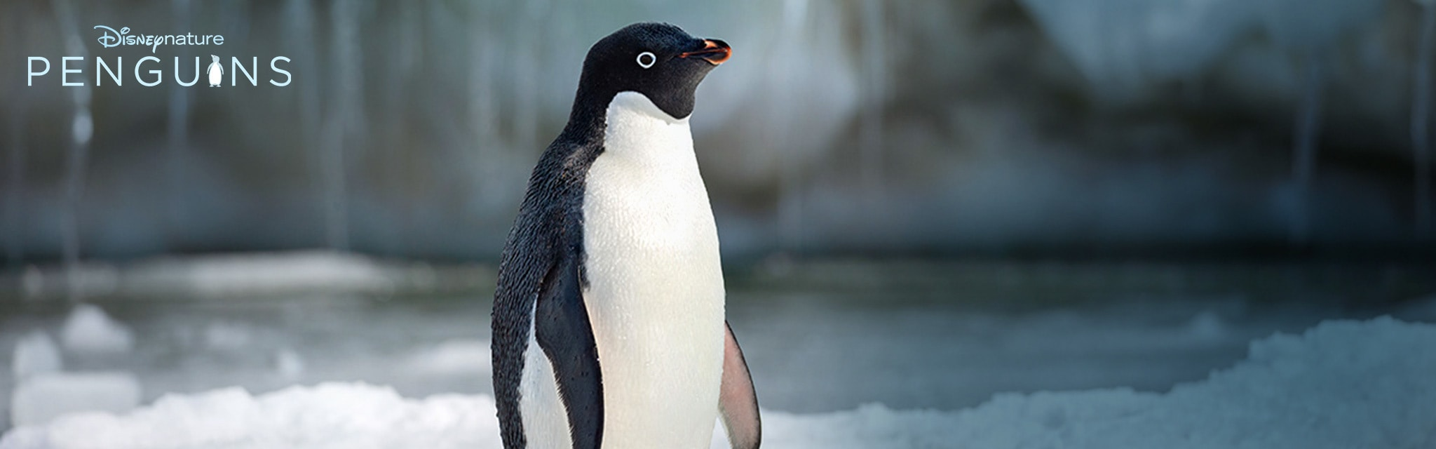 Disneynature - Penguins - Hero