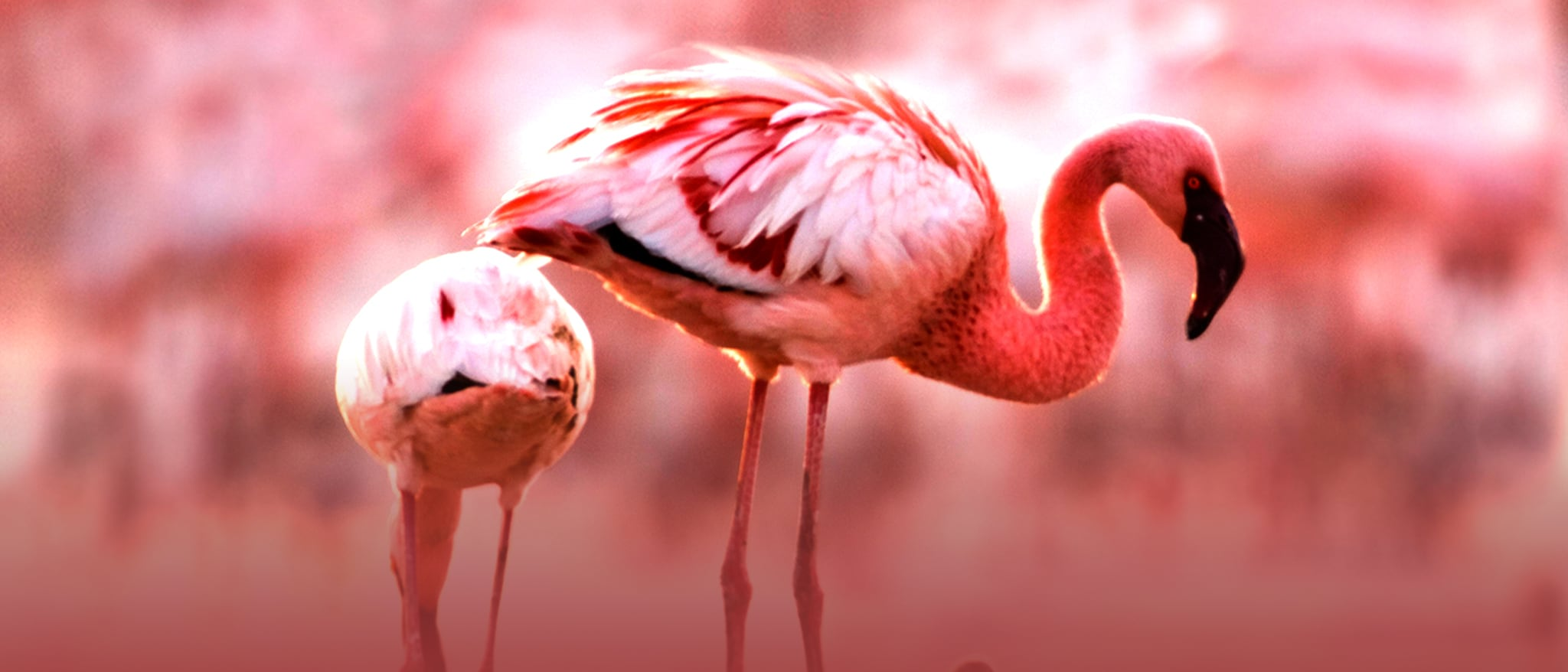 The Crimson Wing: Mystery of the Flamingos Hero