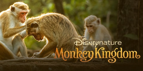 Disney+ introduces Documentaries for the Animal Lovers