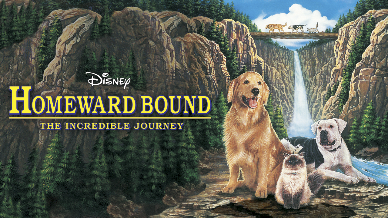 Go on the Adventure of a Lifetime: Six Lovable Moments From Homeward Bound: The Incredible Journey