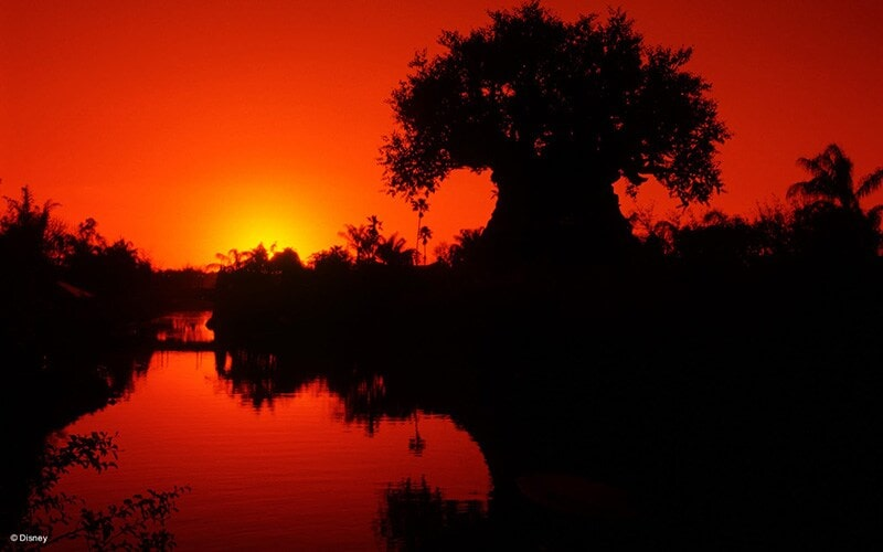 Tree of Life during sunset at Walt Disney World Resort Animal Kingdom
