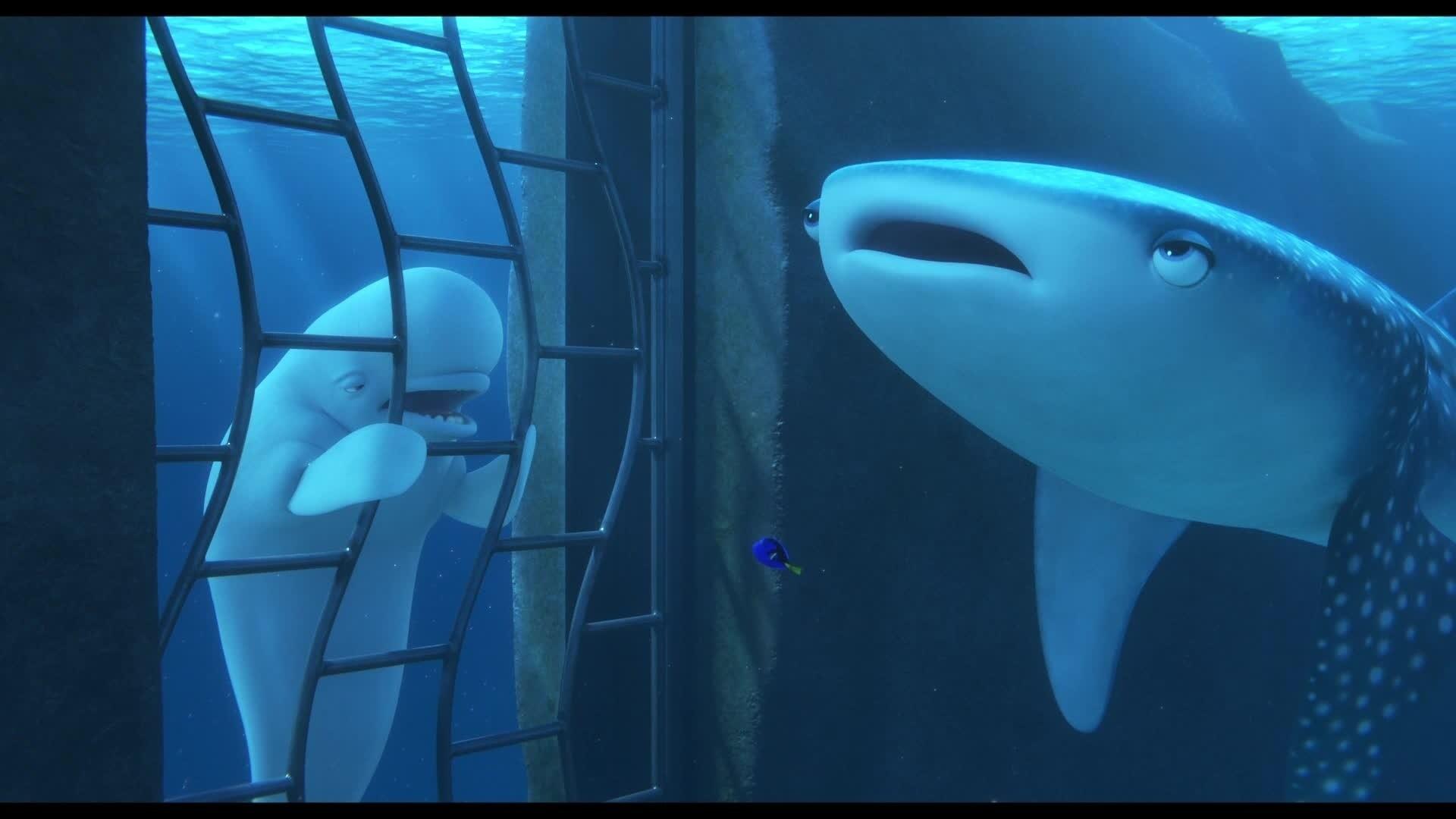 Le Monde de Dory - Extrait : Beluga - VF