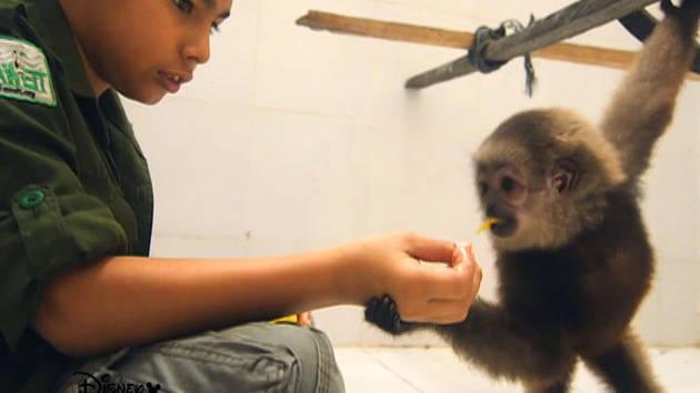 พลังแห่งการทำความดี: สัตว์