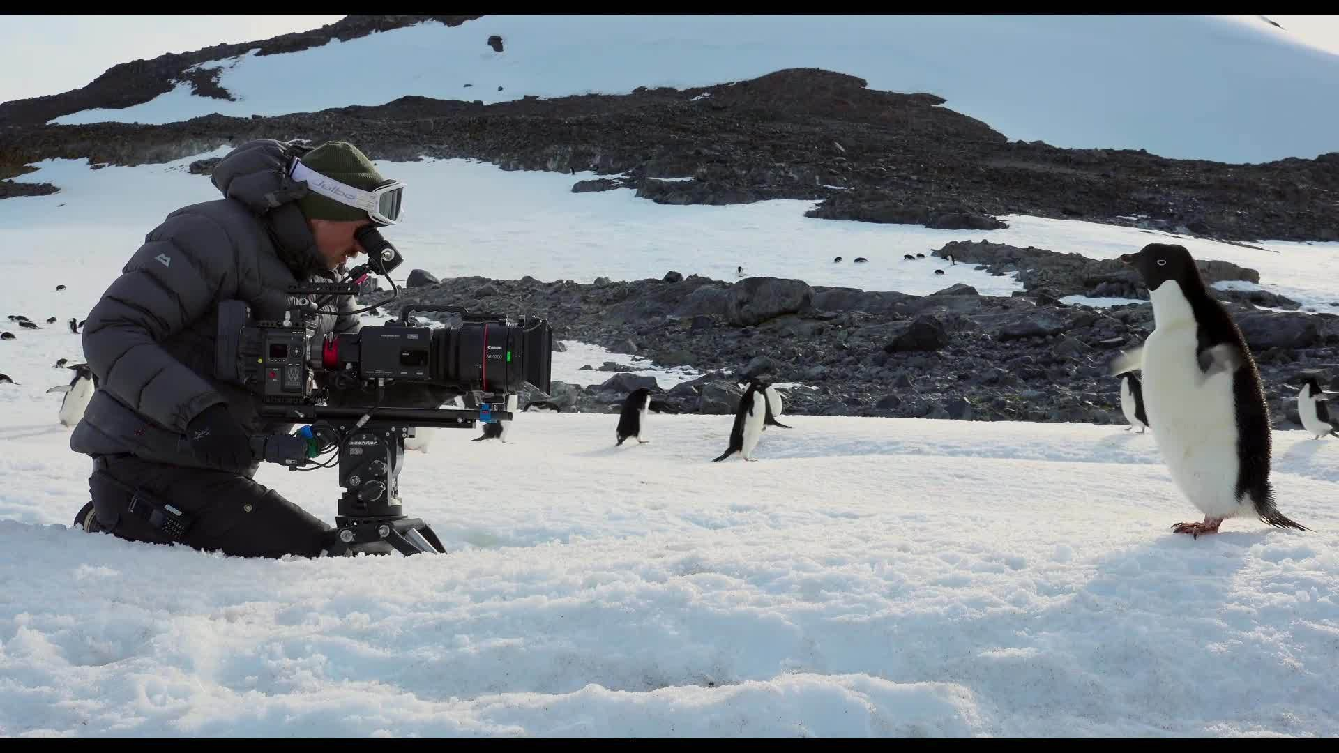 Disneynature Penguins | Behind the Scenes Featurette