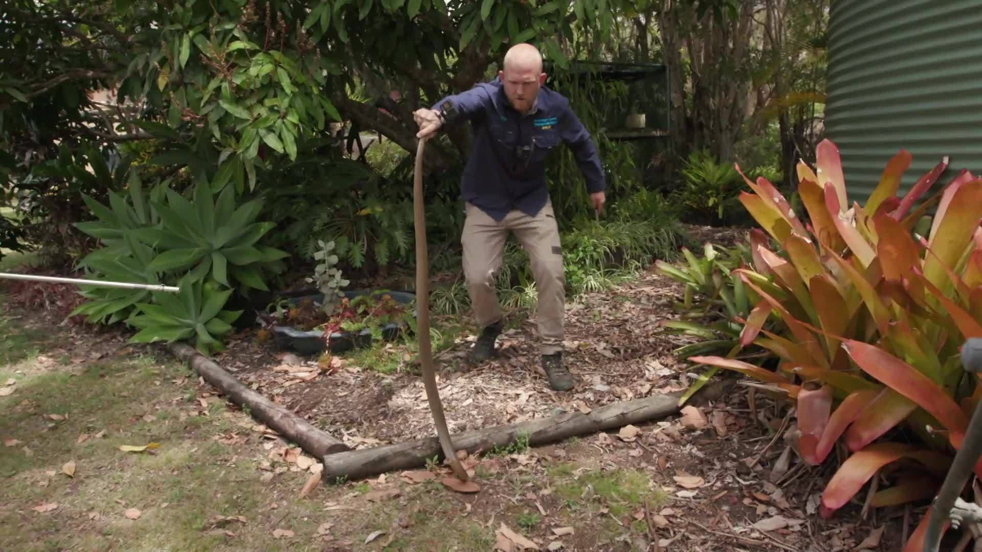 Eastern brown snake chase | Aussie Snake Wranglers | National Geographic Australia & New Zealand