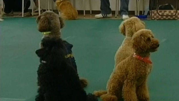 Welcome to Doggy Dance Class!