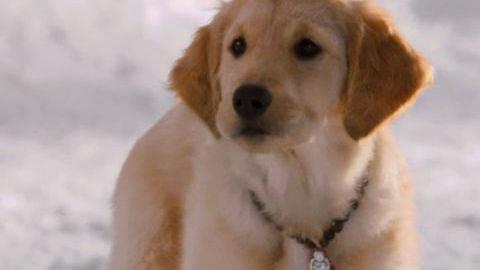 Buddha #4 - Puppy Clips