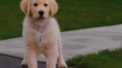 BDawg #1 - Puppy Clips