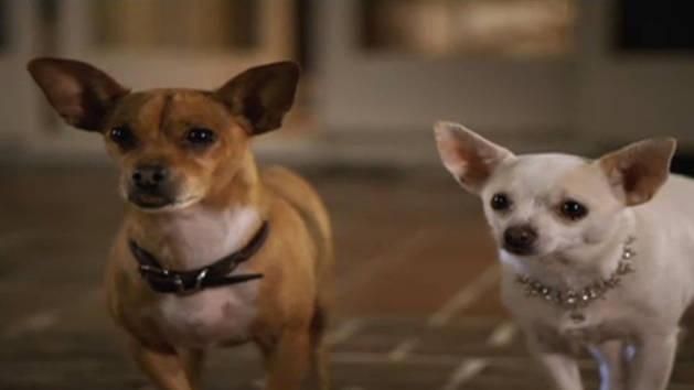 Ay Chihuahua Fun Facts - Dog Breeds