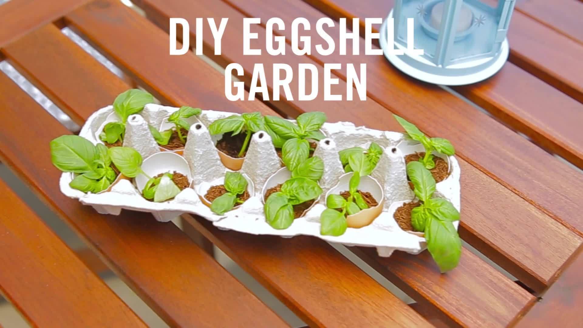 Disney DIY Eggshell Garden