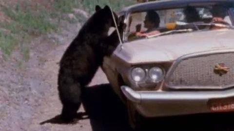 Clip: Bear Jam