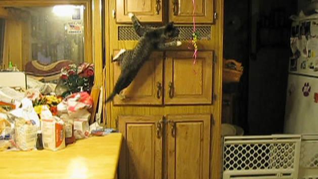 Ninja Cat Catches Balloons