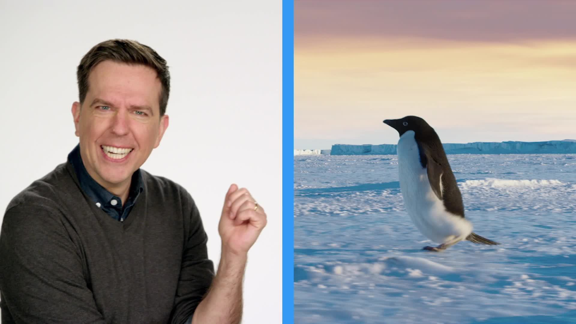 Disneynature Penguins | Get Your Tickets Now!