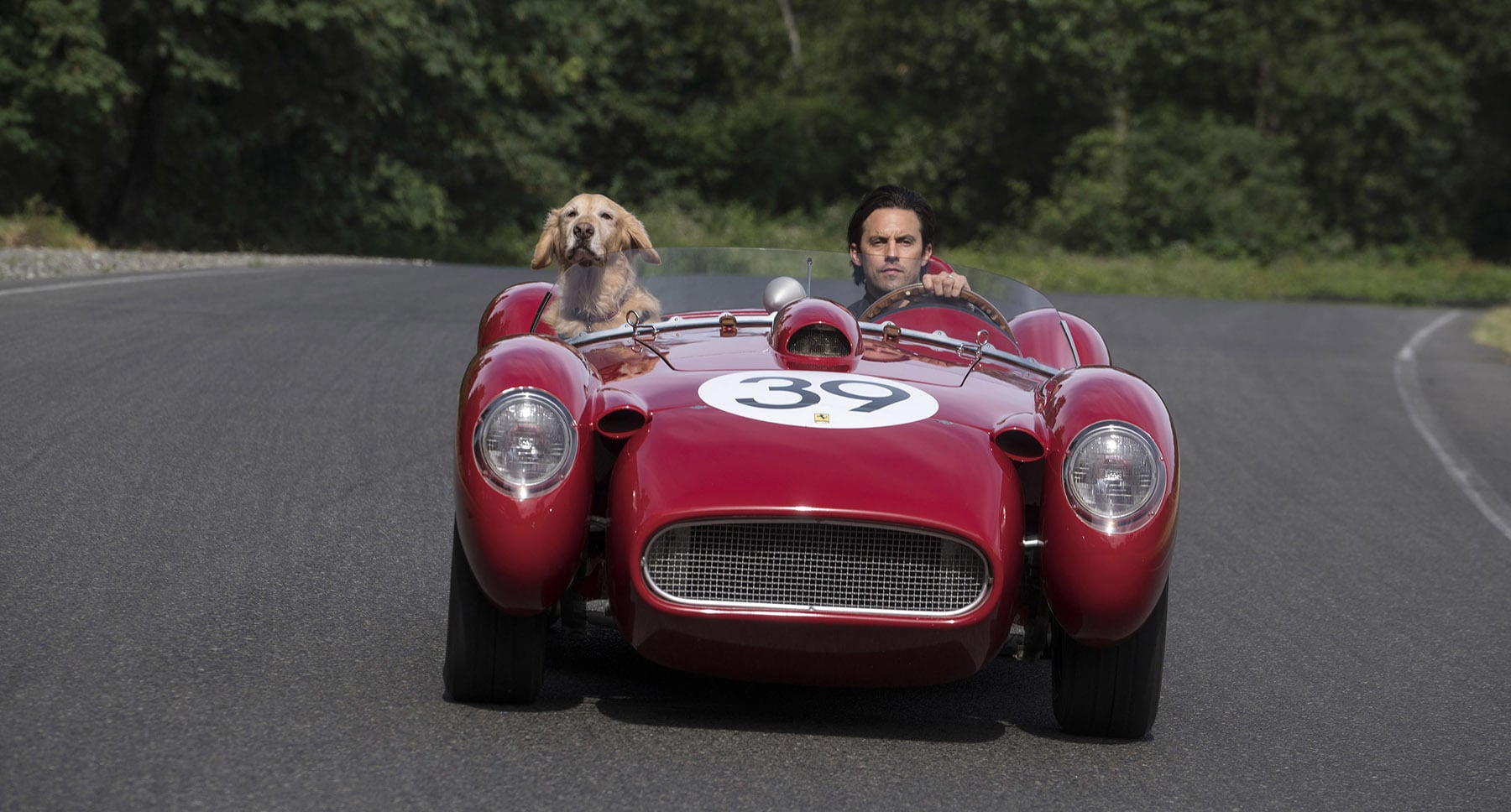 "Denny (Milo Ventimiglia) and dog Enzo driving in a car in the movie ""The Art of Racing in the Rain"""