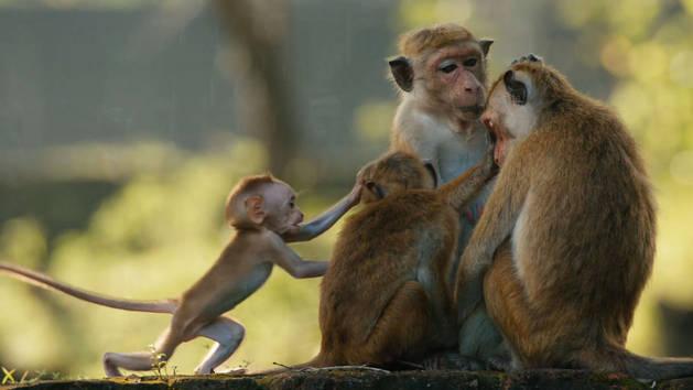 El reino de los monos - Tráiler