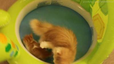 Kitty Pool Party