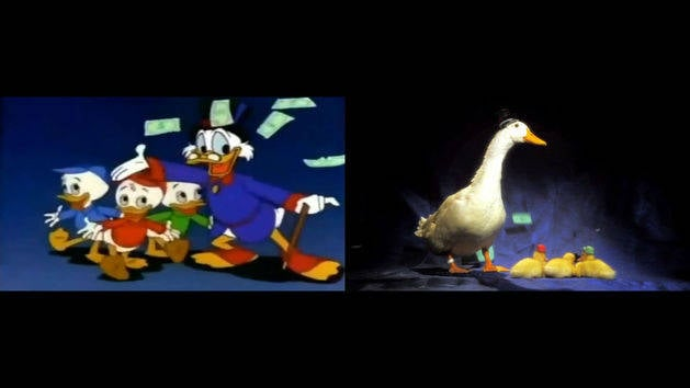 DuckTales with Real Ducks Side by Side Comparison