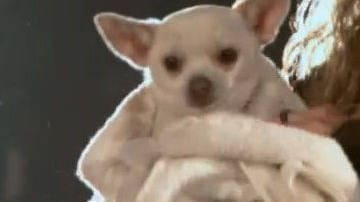 Angel - Featurette - Beverly Hills Chihuahua