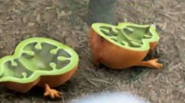 Monster Gourd - Clip - The Secret of the Magic Gourd