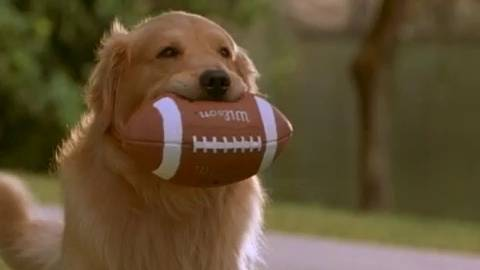 Clip - Buddy Plays Football