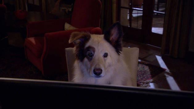 """Episodio 5: """"Stan, genio matemático"""" - Stan, el perro bloguero"""