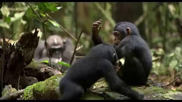 Schimpansen - Offizieller Trailer